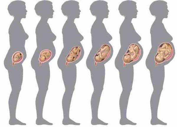 Вес плода по неделям беременности