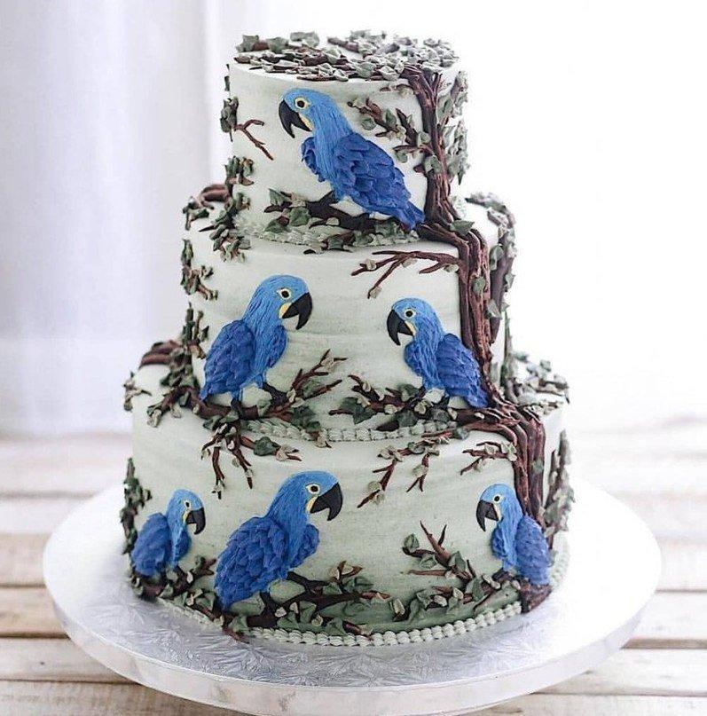 вариант только самые необычные торты в мире фото тренер джоковича была