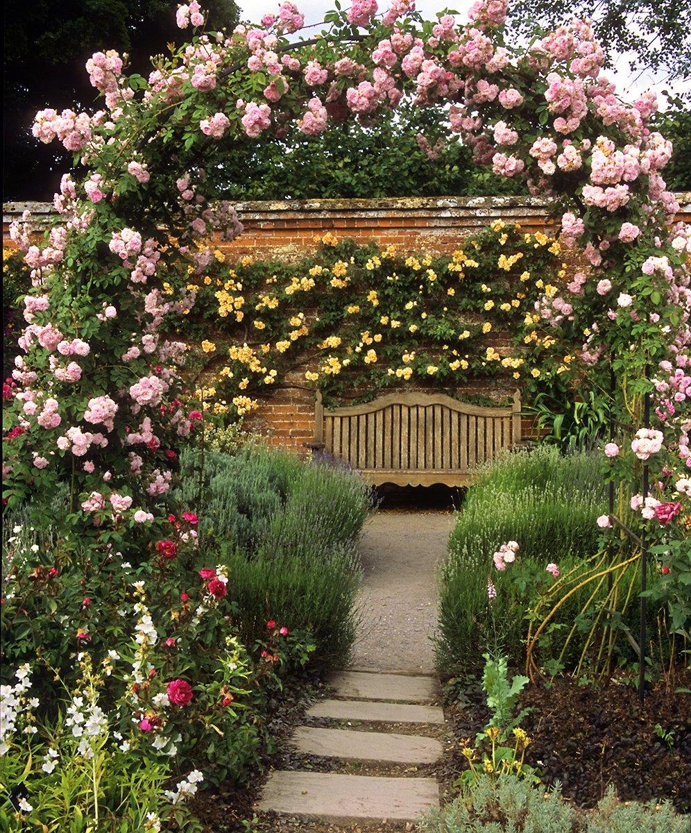 плетистые розы в ландшафте фото фотосессии танцоров шоу