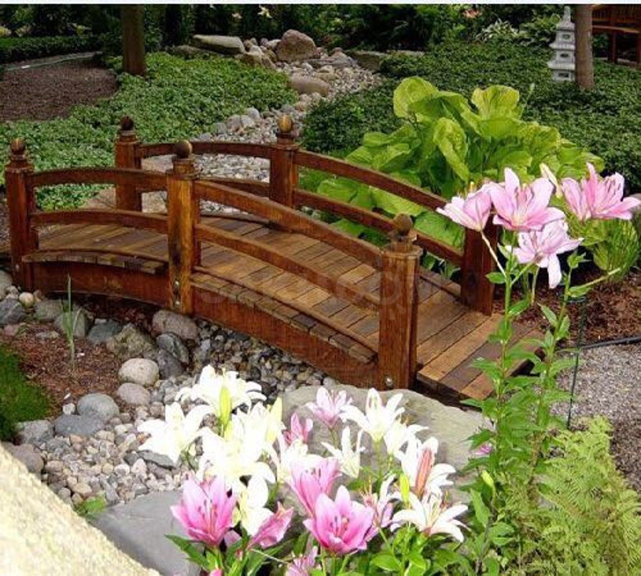 Все садовые цветы фото и названия по алфавиту цветущие более