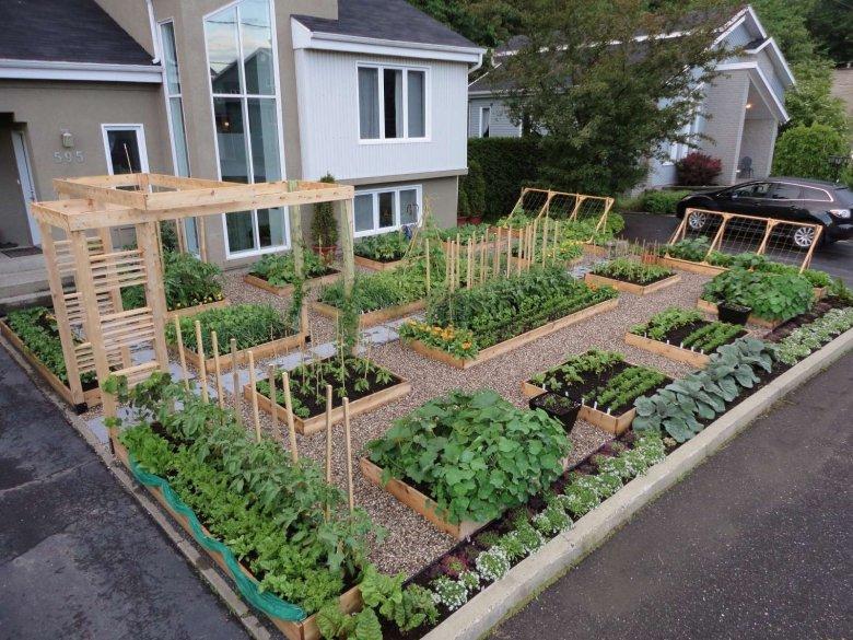 фретка как спланировать огород на даче с фото горды