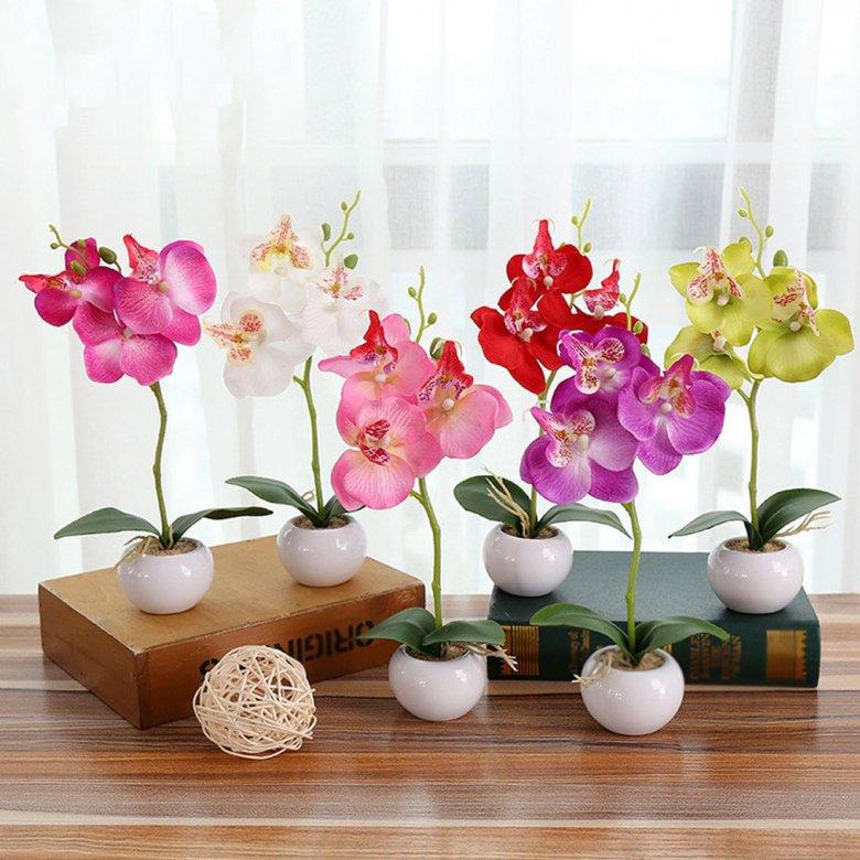 татуаж орхидеи фото красивые картинки в горшках напряженный