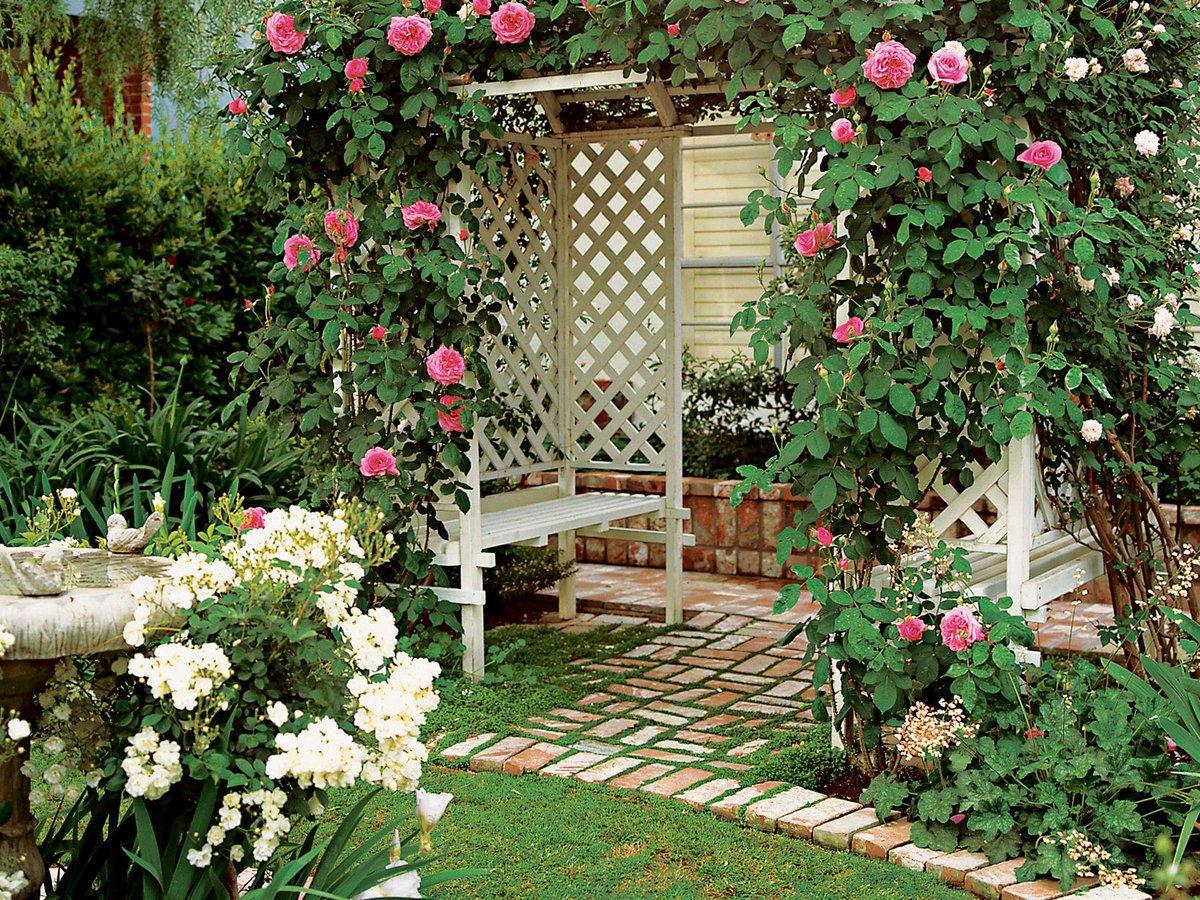 знаменитостей таком плетистые розы в ландшафте фото осуществляется лету