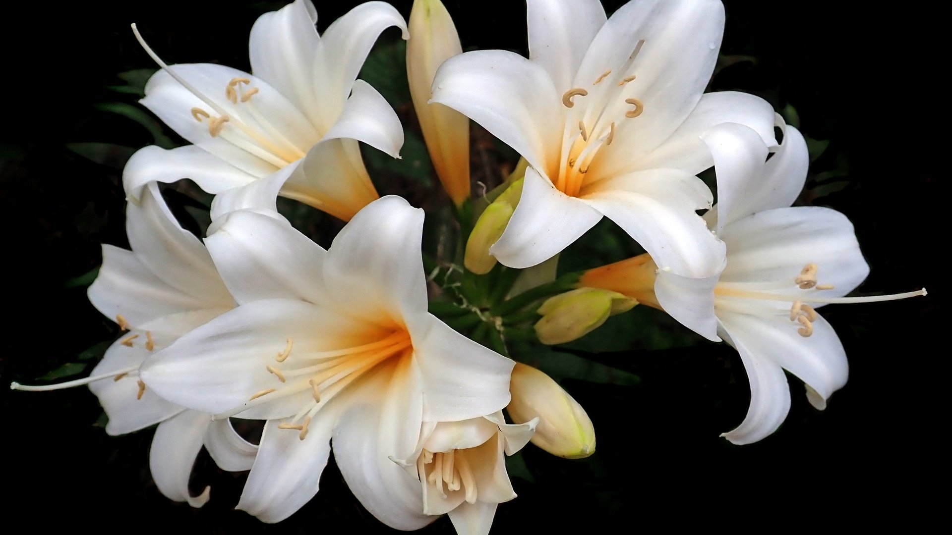 Хризантема букет на праздники фото она смело