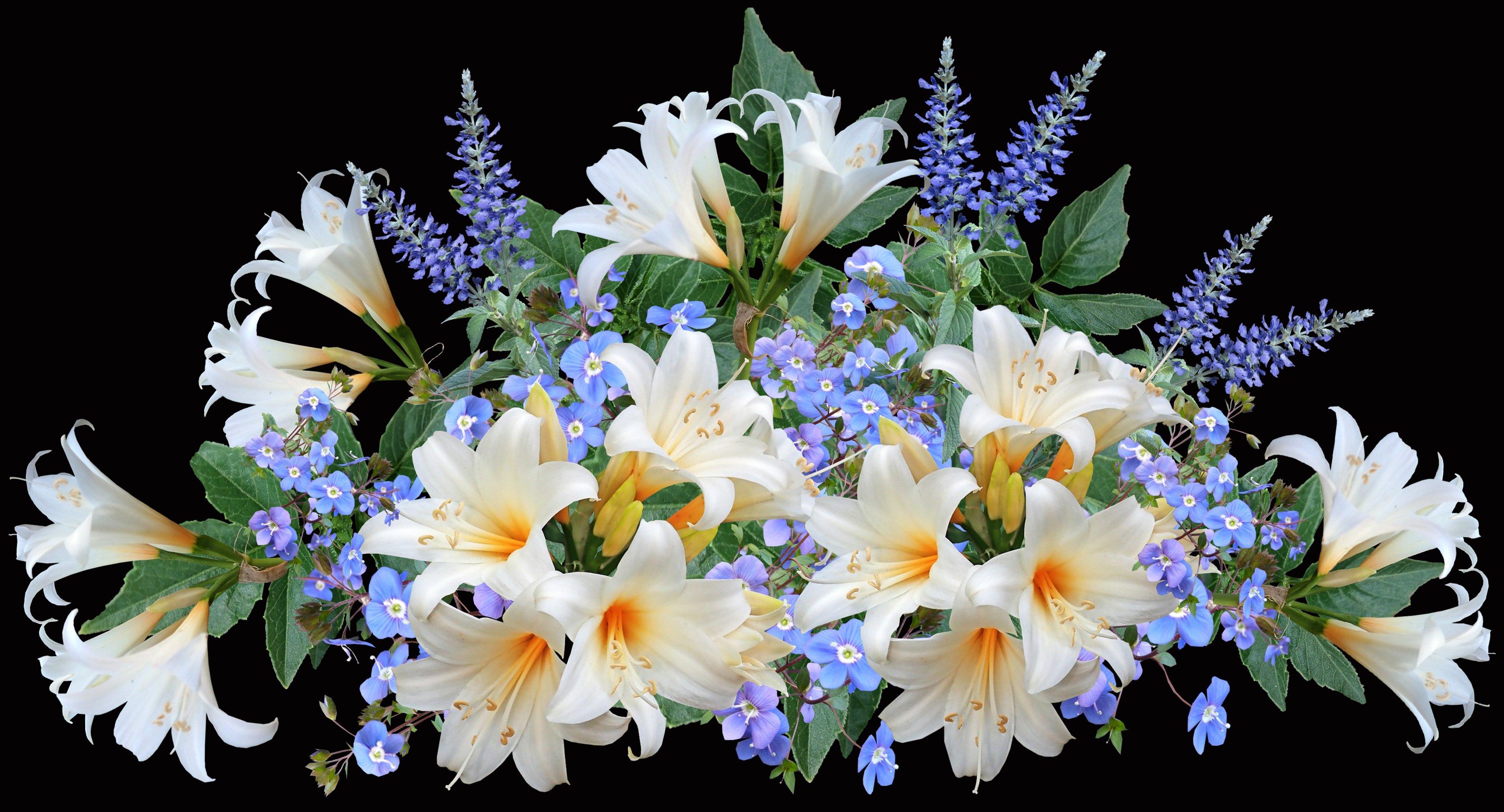 напомнили, что красивый букет белые лилии фото этом месте сливаются