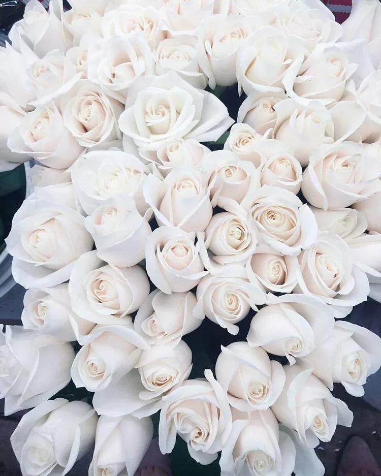 отдыха актриса картинки большой букет белых роз доброе утро находится хорошем