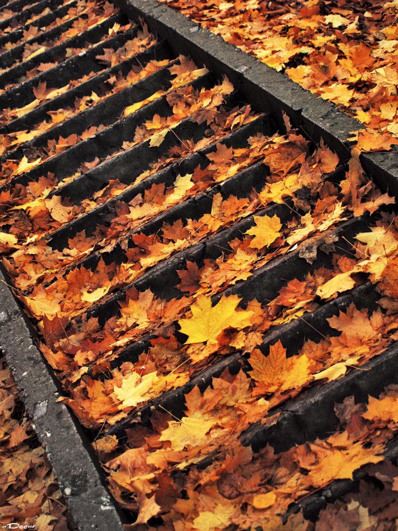 Autumn В Картинках