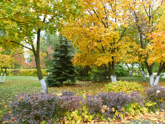 Картинки осень
