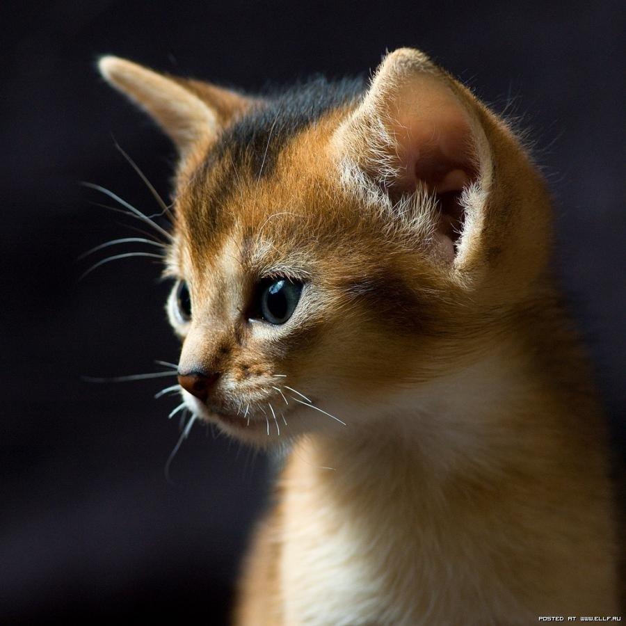 фотографии котят интересные